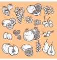 Fruits and berries sketch icons vector image