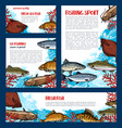 fish banners set for fishing sport design vector image