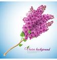 Blooming lilacs vector image