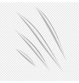 claw vecror scratches vector image