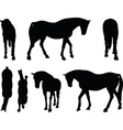 horse silhouette in walking head down vector image
