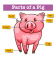 Diagram showing parts of pig vector image