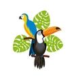 brazilian culture design vector image