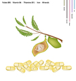 Chickpea with Vitamin B9 B6 B1 and Iron vector image vector image