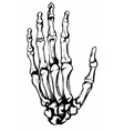Hand drawn hand bones vector image