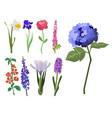 beautiful spring flower botanical bloom watercolor vector image