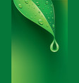 fresh green leaf with many water droplets vector image vector image