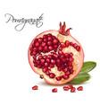 pomegranate realistic vector image