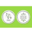 Ayurvedic Herb - Product Label with ginkgo vector image