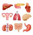 cartoon human organs set vector image
