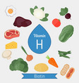 vitamin h or biotin infographic vitamin h or vector image