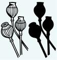 Opium poppyhead vector image vector image