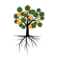 Decorative apricot tree vector image vector image