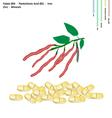 Kidney Bean with Vitamin B9 B5 Iron vector image