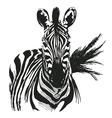 hand drawing zebra vector image