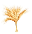 Wheat ears isolated on white background EPS 10 vector image