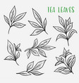 sketches of green or black tea sprout with leaves vector image