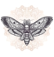 Deaths head hawk moth with mandala vector image