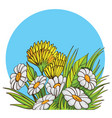 bouquet of chamomile vector image