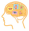 human brain five senses vector image vector image