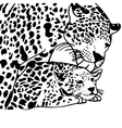 Mother and child leopard vector image