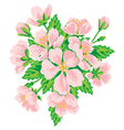 Bouquet of pink flowers isolated on white vector image