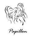 Papillon vector image