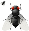 Large fly vector image vector image