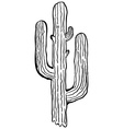 simple black and white cactus vector image