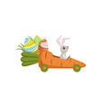 cute little bunny driving car carrot funny rabbit vector image