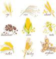 Cereals Icon Set vector image