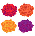 beautiful multi-colored roses flower vector image