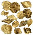 Seashell collection vector image vector image