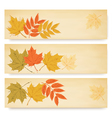 Three autumn banners with color leaves vector image vector image