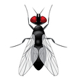 Fly insect sketch symbol vector image