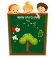 kids looking at apple life cycle vector image