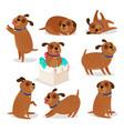 brown funny cartoon puppies vector image