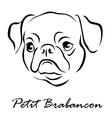 Petit Brabancon vector image