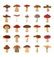 cartoon mushrooms set vector image