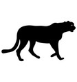 Silhouette beautiful jaguar on a white background vector image