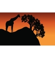 Giraffe silhouette in cliff scenery vector image