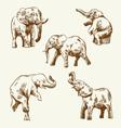 Hand drawn elephant set vector image