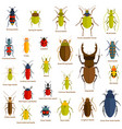 flat insect set isolated on the white vector image