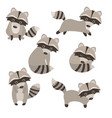 set of cute raccoons set of cute raccoons vector image