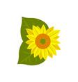flower of sunflower icon vector image