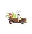 cute bunny driving vintage car decorated with vector image