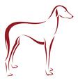 dog azawakh vector image vector image