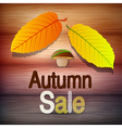Autumn Sale theme vector image