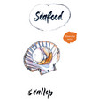 scallop watercolor vector image