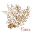 Spicy herbs and herbal spice seasonings sketch vector image